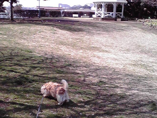 3月15日春の犬