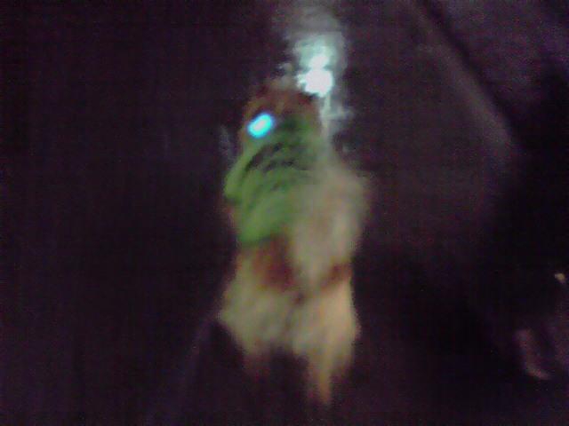 3月17日パトリック犬