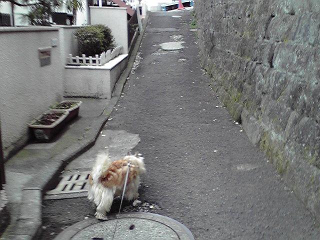 3月19日桜咲く犬