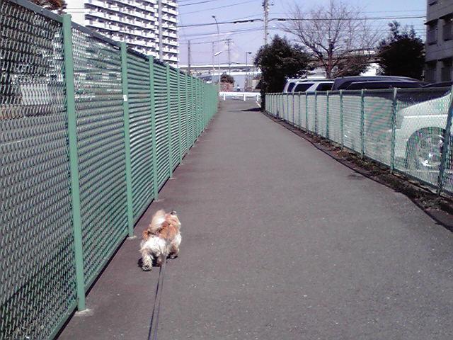 3月20日春分の犬