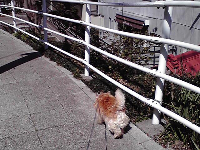 3月21日晴れ犬