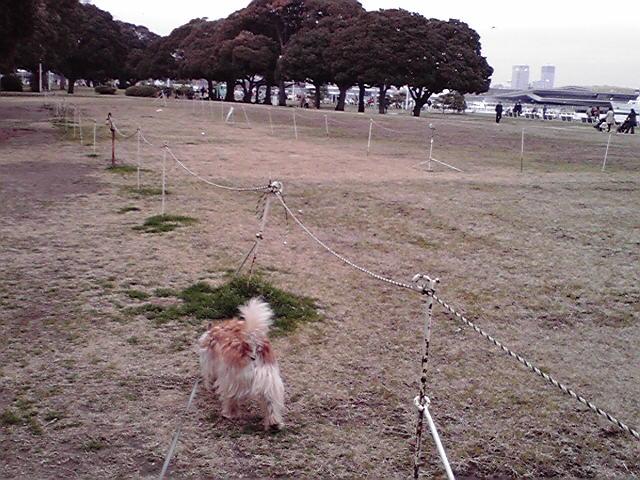 3月22日曇天犬