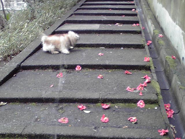 3月24日椿犬