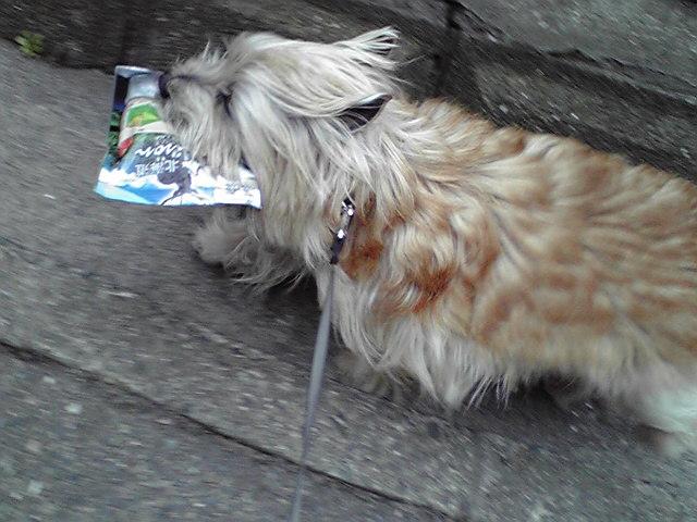 3月25日運ぶ犬