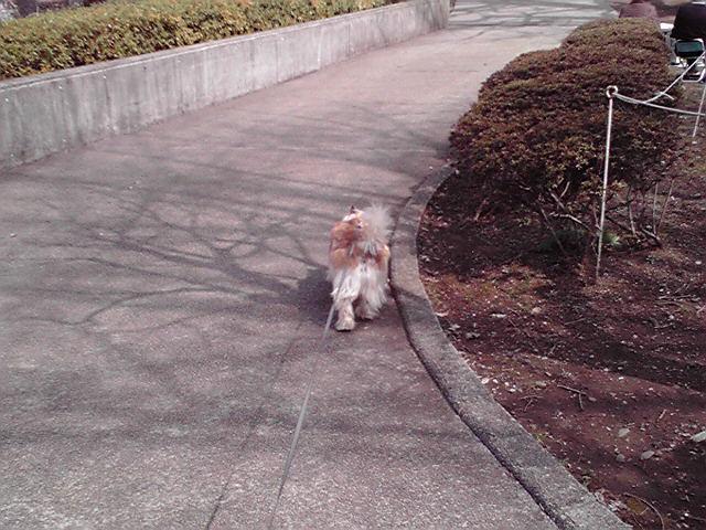 3月28日春の犬