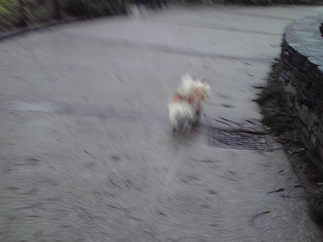 3月31日嵐犬