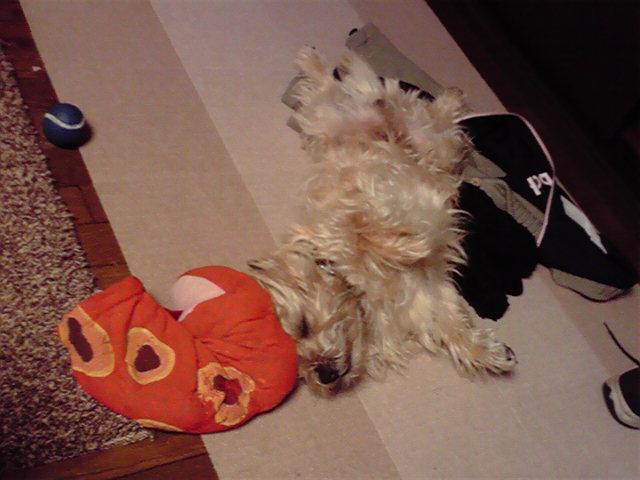 4月1日寝る犬