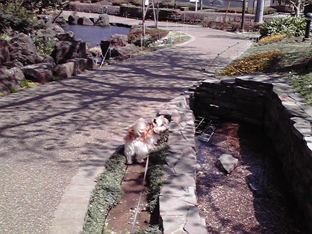 4月5日桜犬