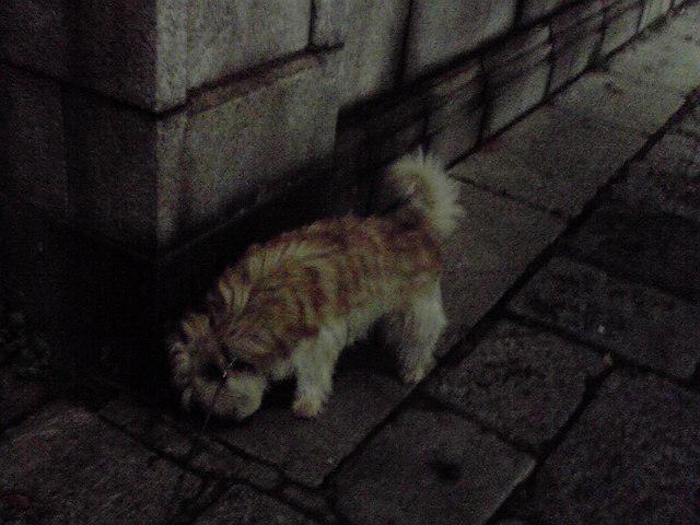 4月14日雨の留守番犬