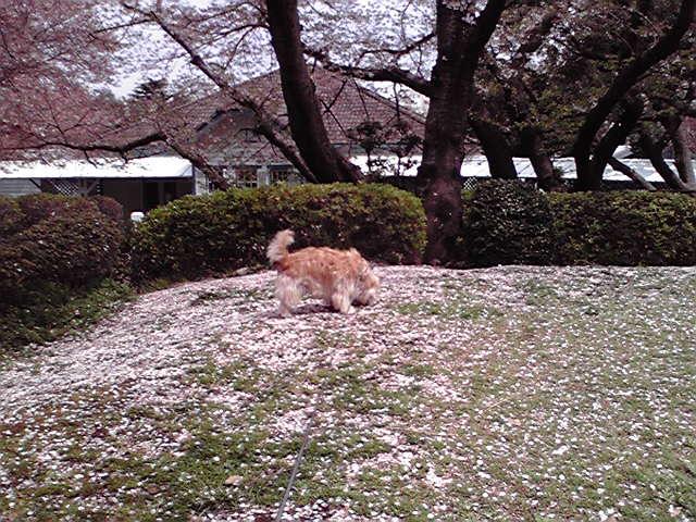 4月17日ひらひら犬