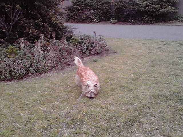 4月20日風に吹かれる犬