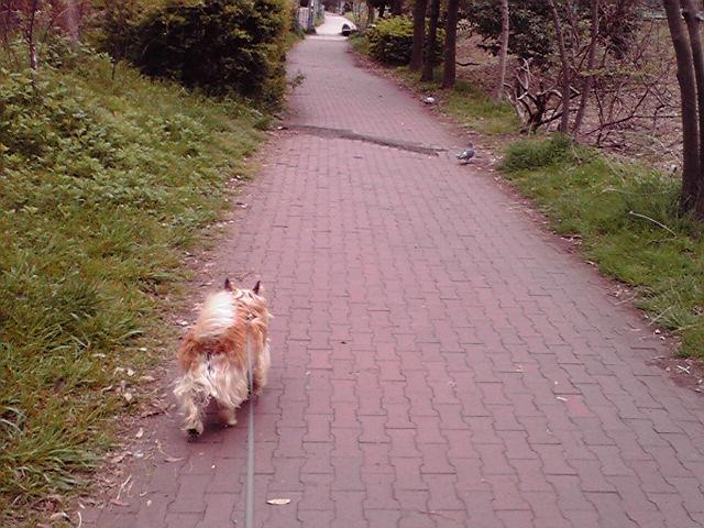 4月22日日曜日犬