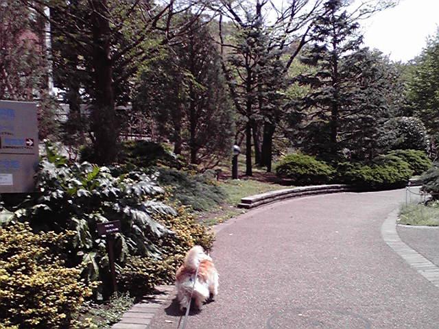 4月24日暑い犬