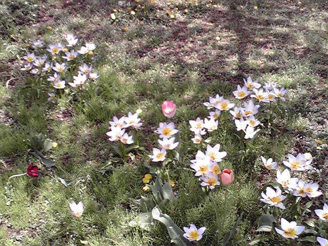 春なのだ。