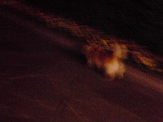4月29日留守番犬
