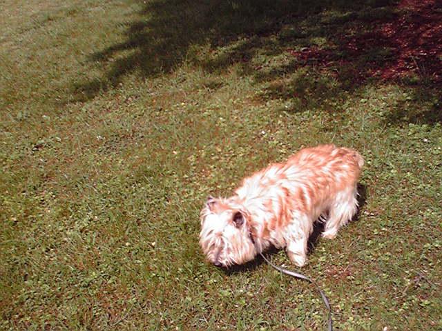 5月1日初夏の犬