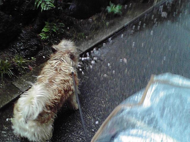 5月2日怪我犬