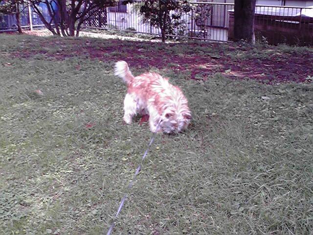 5月6日連休最終日犬