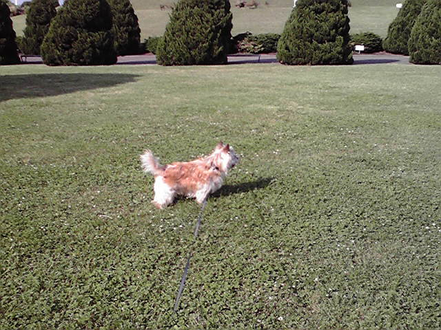 5月20日遊ぶ犬