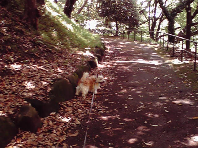 5月23日青空犬