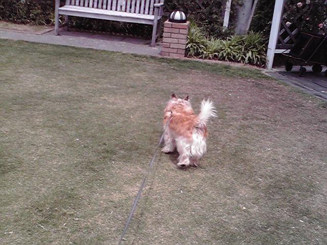 5月24日薔薇犬