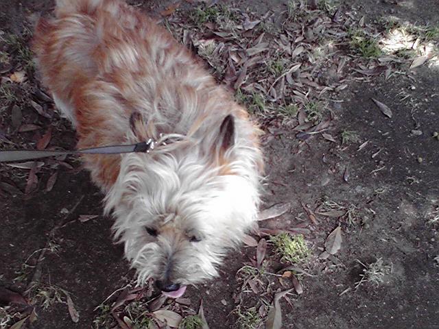 5月28日大気の状態不安定犬