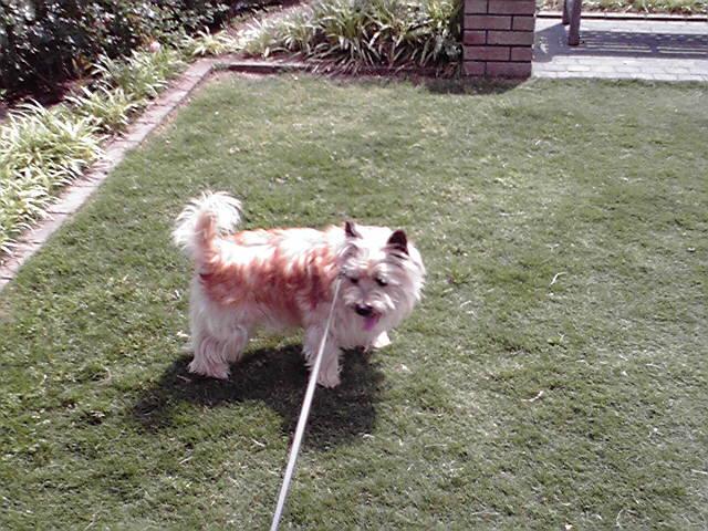 5月29日暑い犬