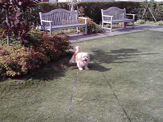 6月4日遊ぶ犬