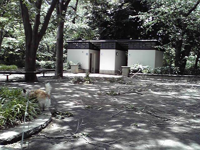 6月20日台風一過犬