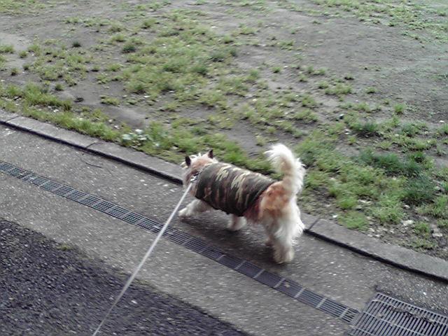 6月22日お腹ぎゅるぎゅる犬