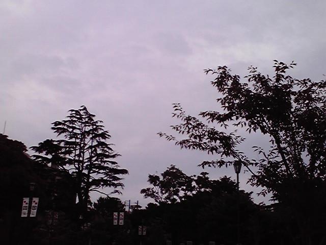 7月3日雨犬