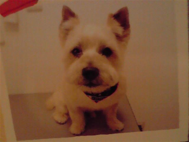 7月7日トリミング犬