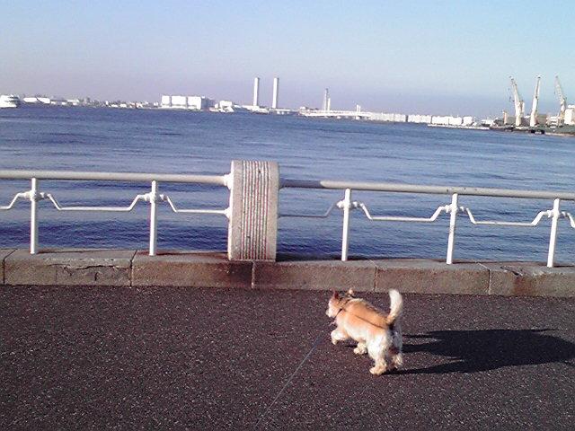 7月10日海犬