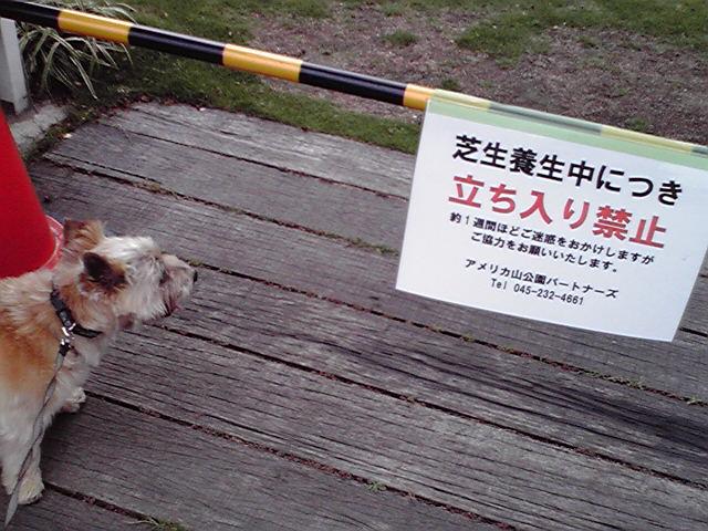 7月13日絶望犬