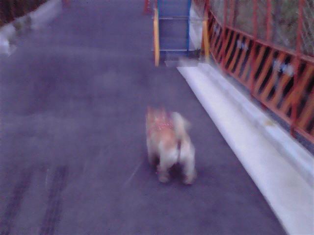 7月27日五輪犬