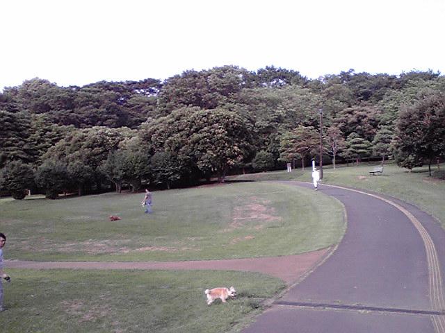 7月28日根岸森林公園犬