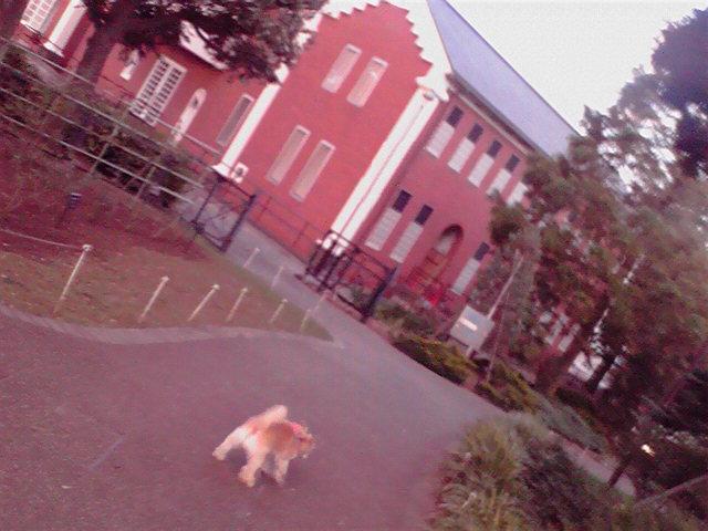 7月30日夕焼け犬