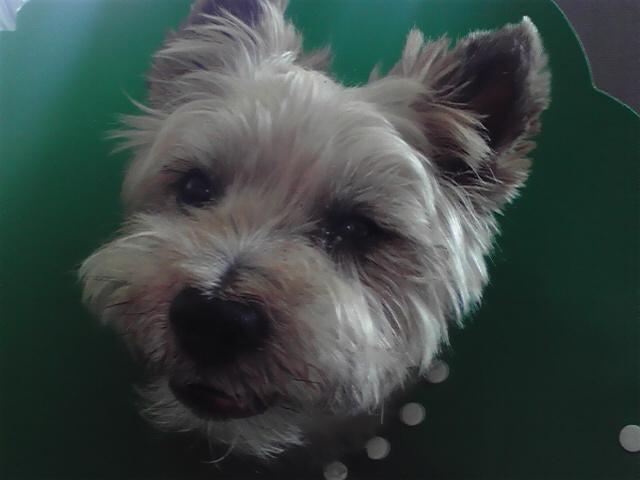 7月31日イギリス犬