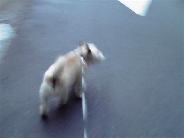 8月1日お風呂犬