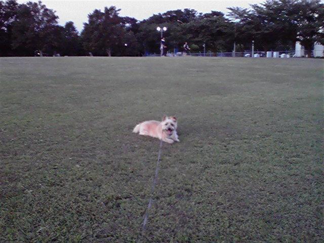 8月3日雨犬