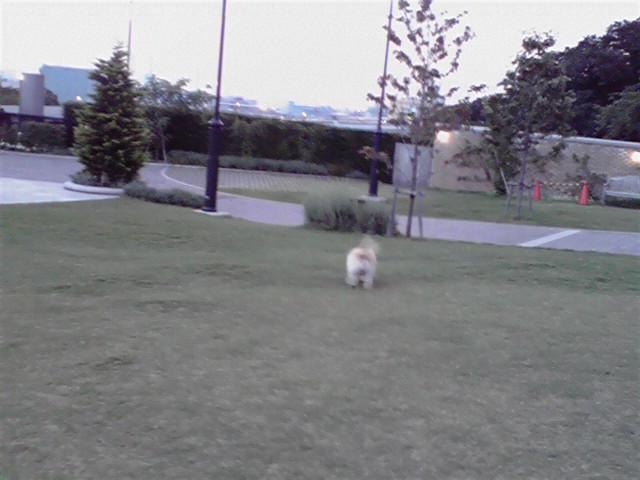 8月7日あちゅい犬