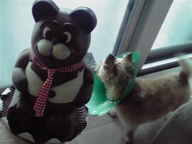 8月10日くまちゃん犬
