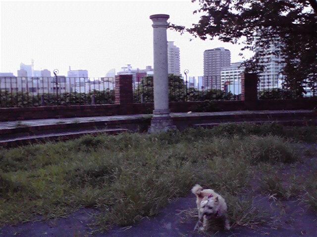 8月12日夕焼け犬