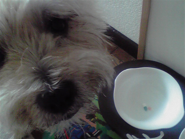 8月16日食べる犬