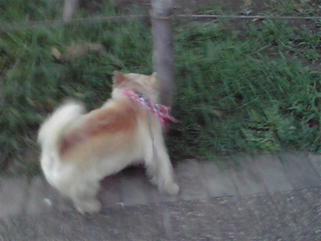 8月17日パン田犬