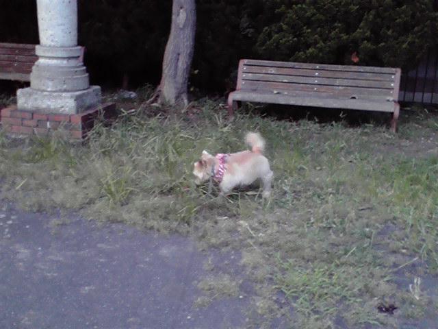 8月18日厄犬