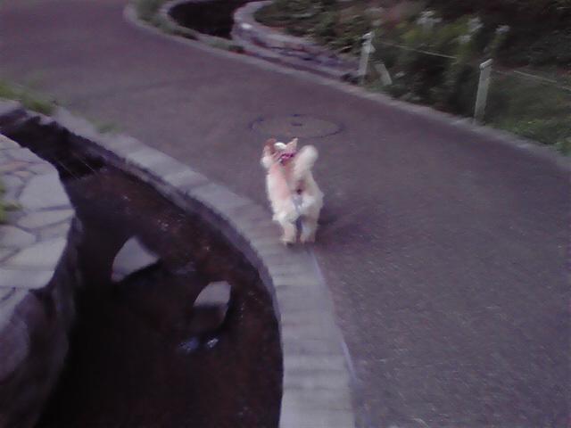 8月20日食べる犬