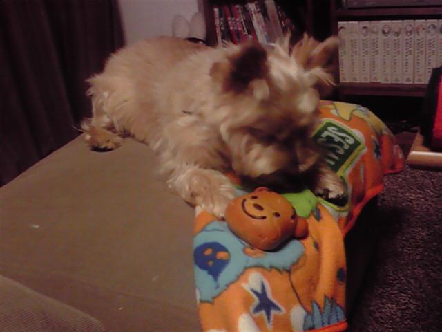 8月22日秋の犬