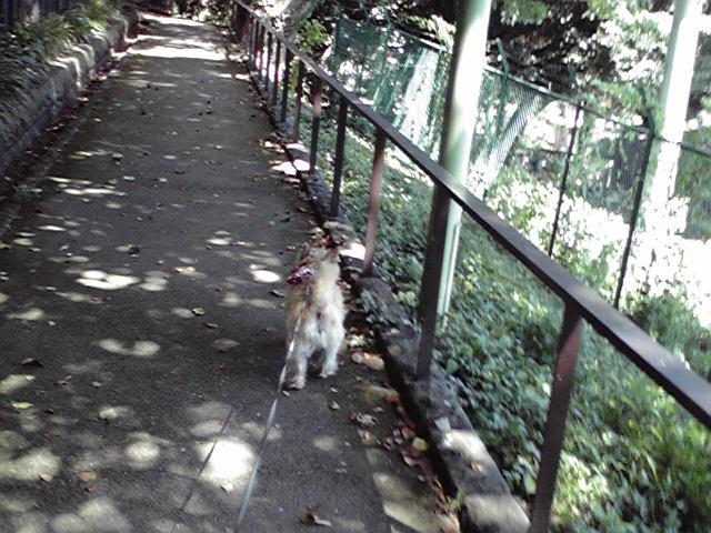8月23日留守番犬