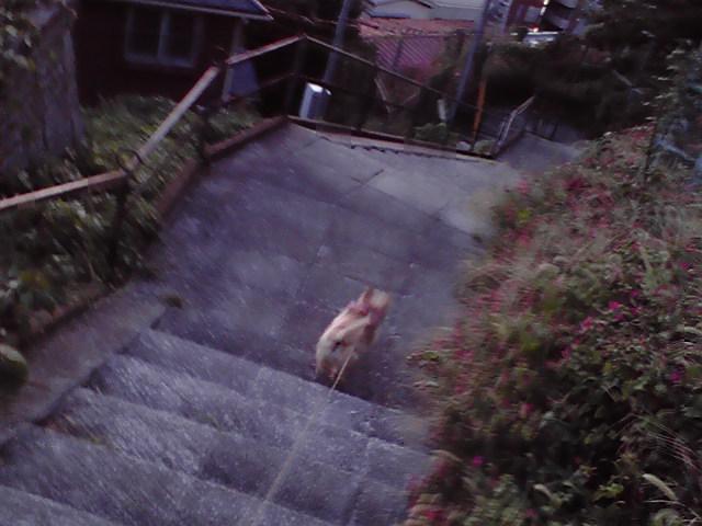 9月10日夕映え犬